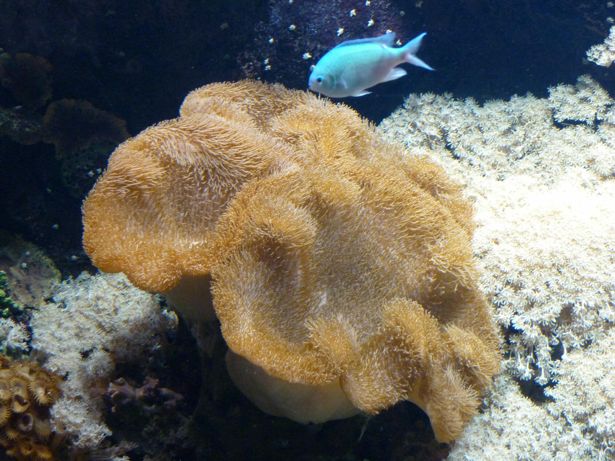 Bild mit Aquarium