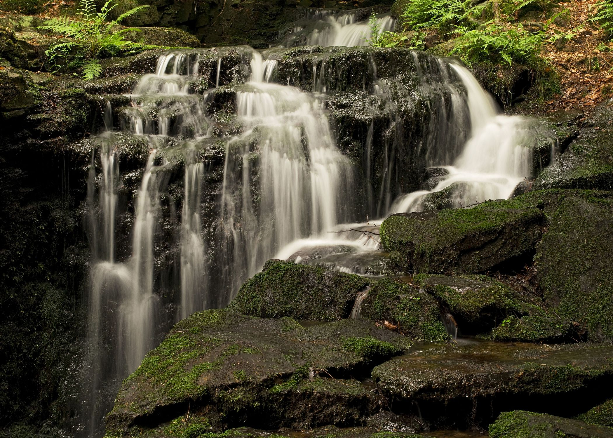 Bild mit Natur, Wasser, Landschaften, Bäume, Gewässer, Wälder, Wasserfälle, Wald, Baum, Landschaft, Wasserfall