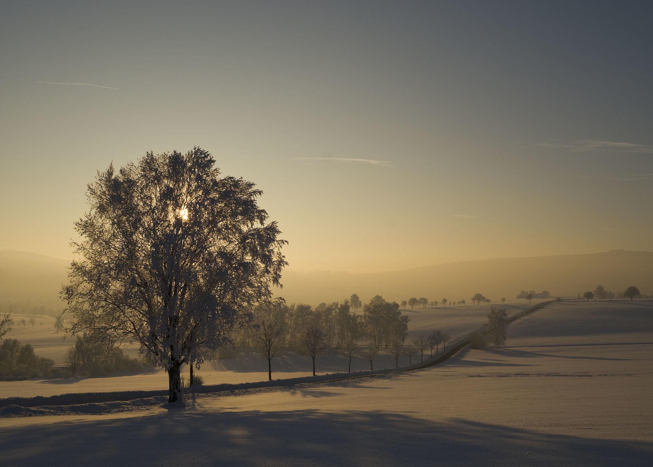 Bild mit Natur, Natur, Landschaften, Bäume, Winter, Schnee, Baum, Landschaft, Natur und Landschaft, Winterzeit