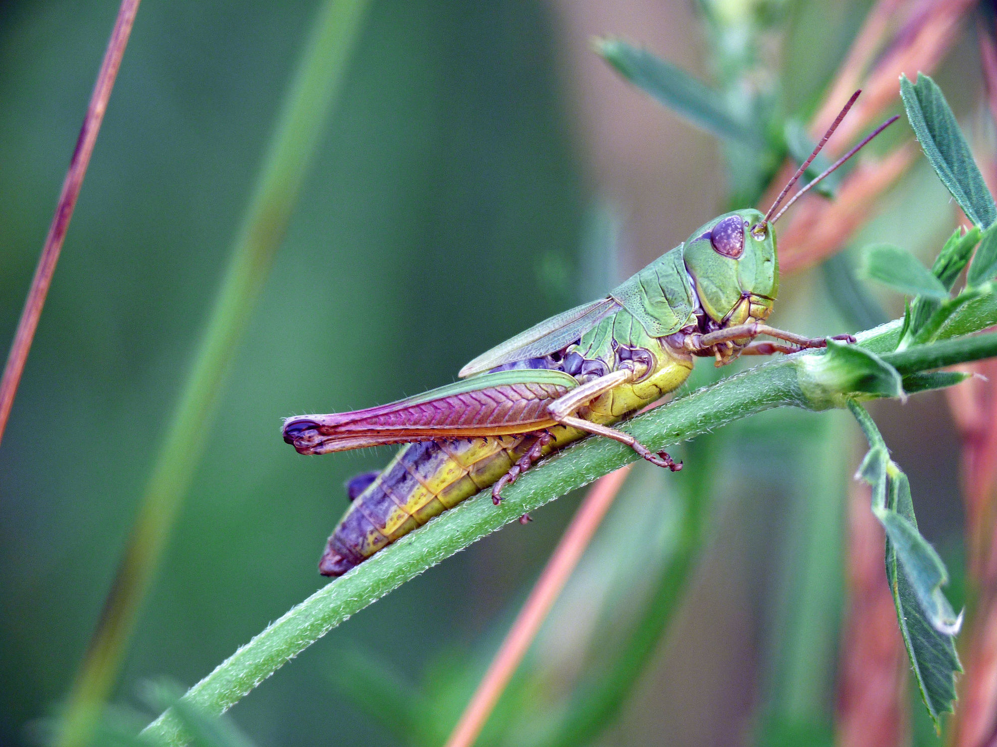 Bild mit Fauna