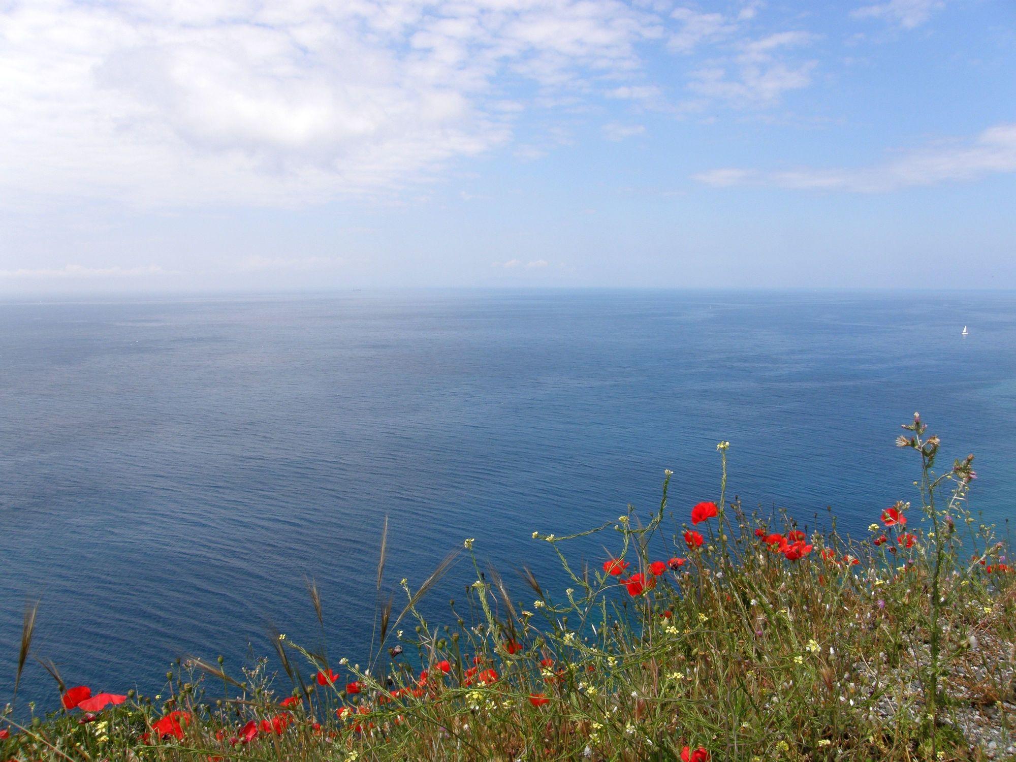 Bild mit Gewässer, Mohn, Meer, Mohnblume, Mohnfeld, See, Feld, Küste, Felder, Mohnblumen, küsten