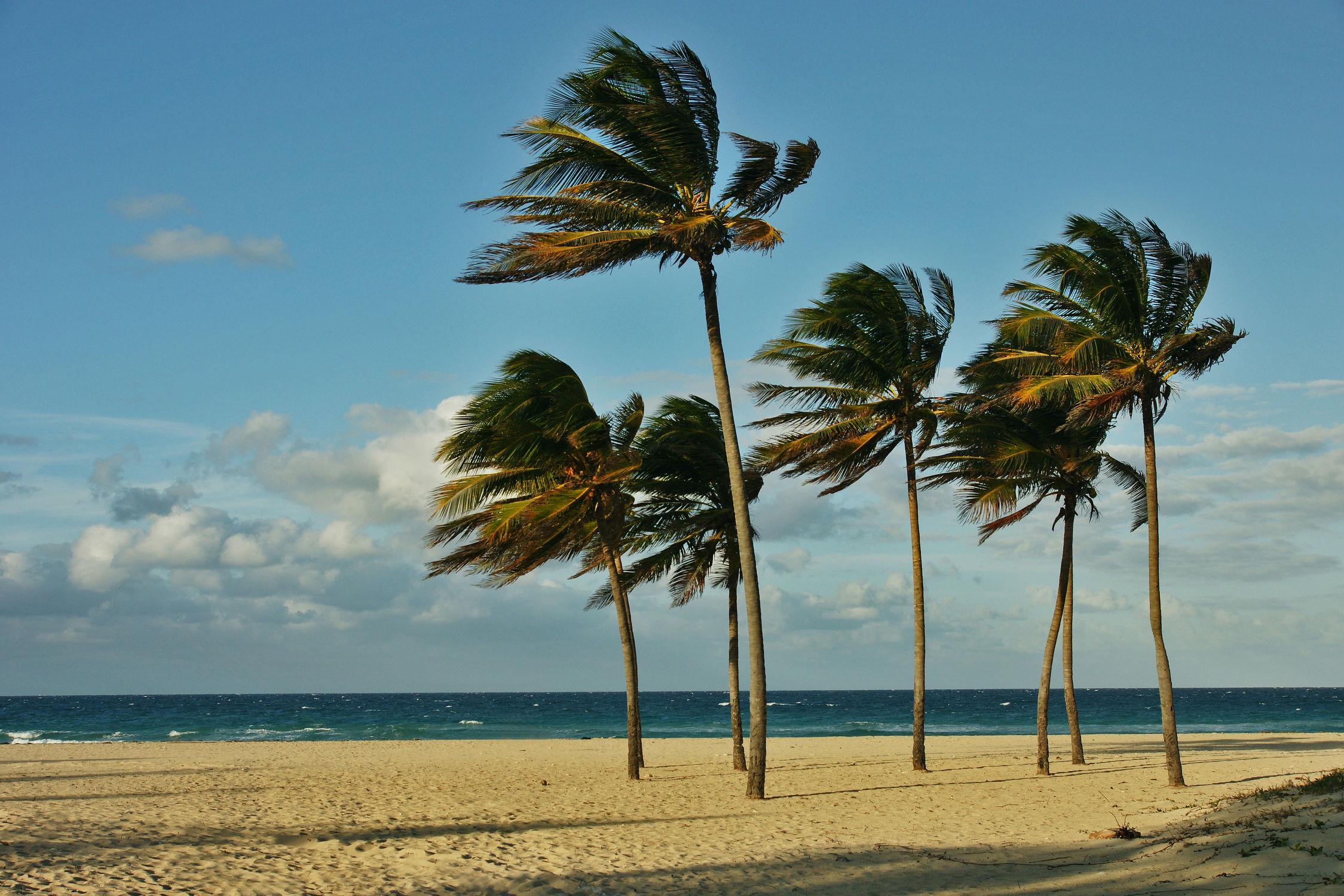 Bild mit Strand, Am Meer