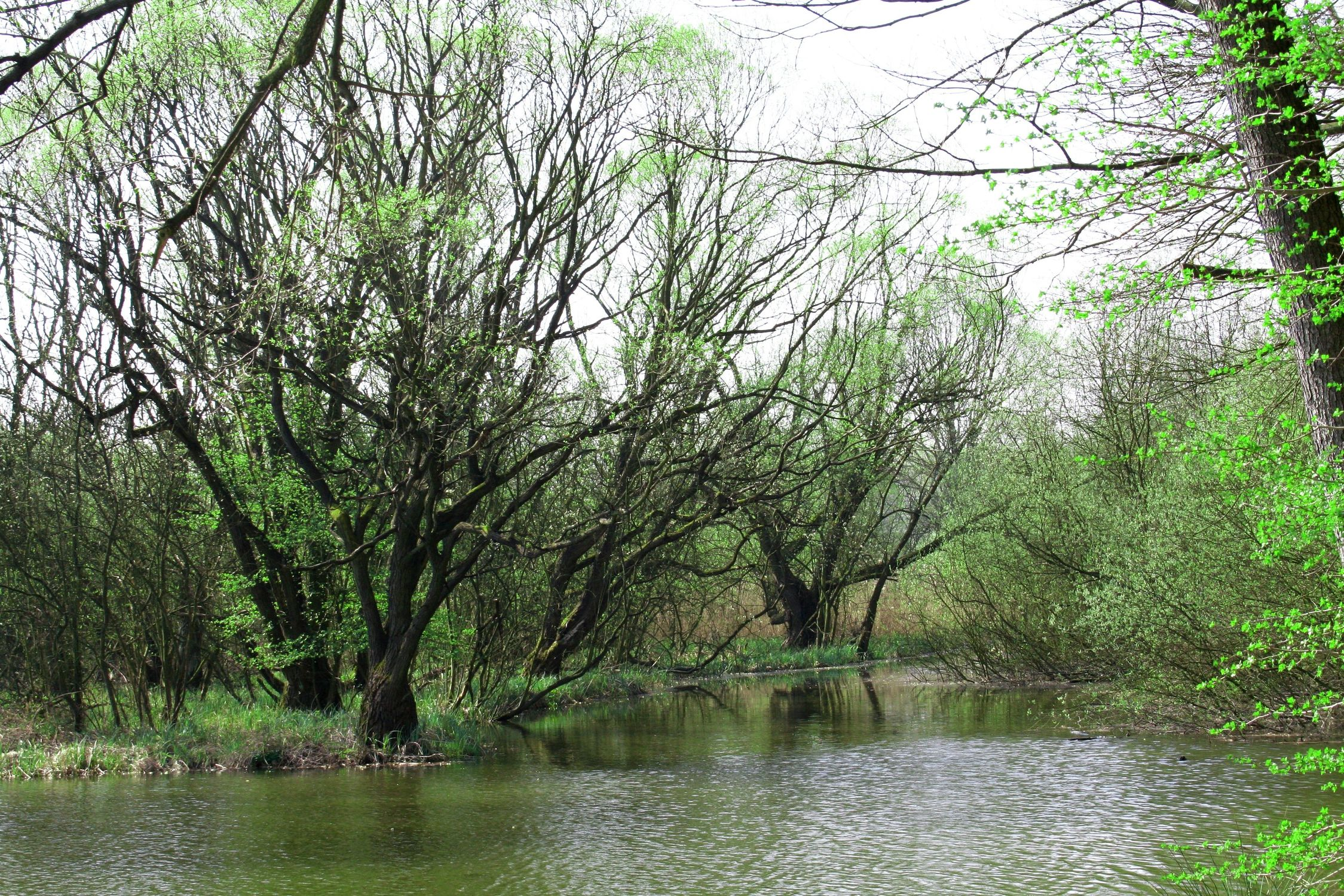 Bild mit Farben, Natur, Grün, Pflanzen, Landschaften, Bäume, Gewässer, Küsten und Ufer, Wälder, Seen, Flüsse, Sümpfe