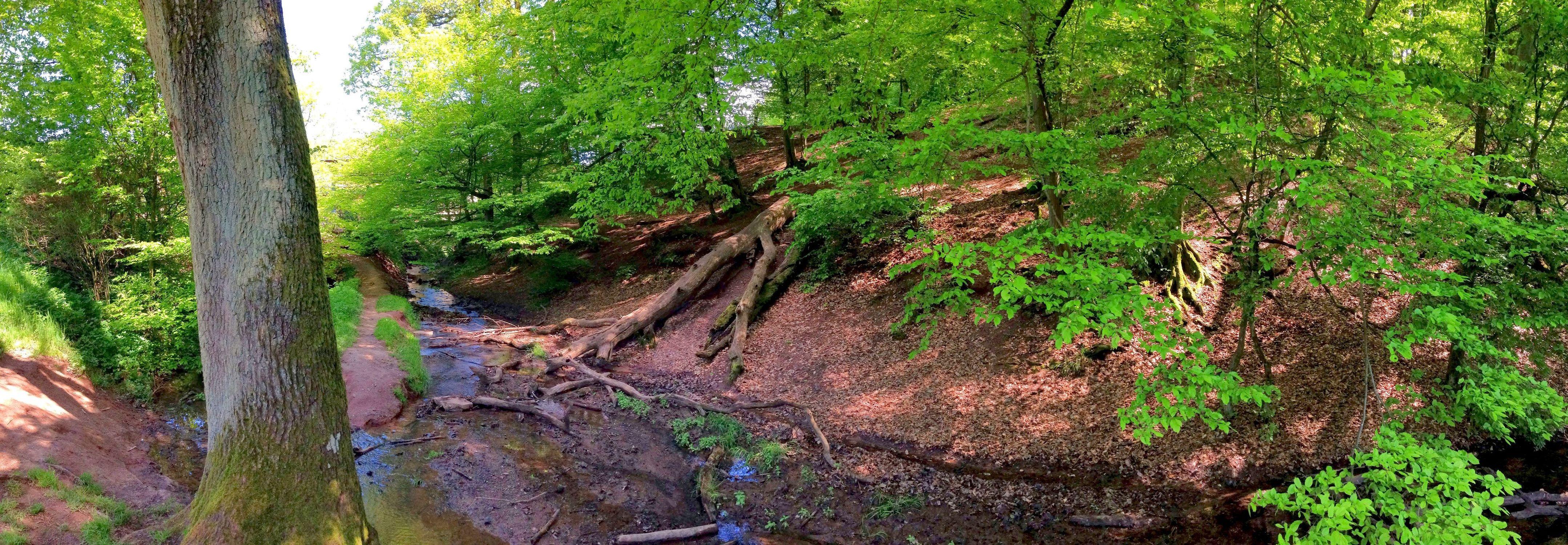 Bild mit Natur, Pflanzen, Landschaften, Bäume, Gewässer, Wälder, Flüsse, Felsen, Orte, Parks, Nationalparks