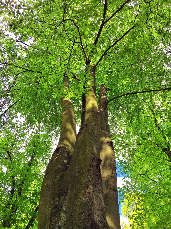 Bild mit Farben, Natur, Grün, Pflanzen, Landschaften, Bäume, Jahreszeiten, Wälder, Herbst, Laubbäume, Birken, Wald, Baumkrone, Lichtung, Baum