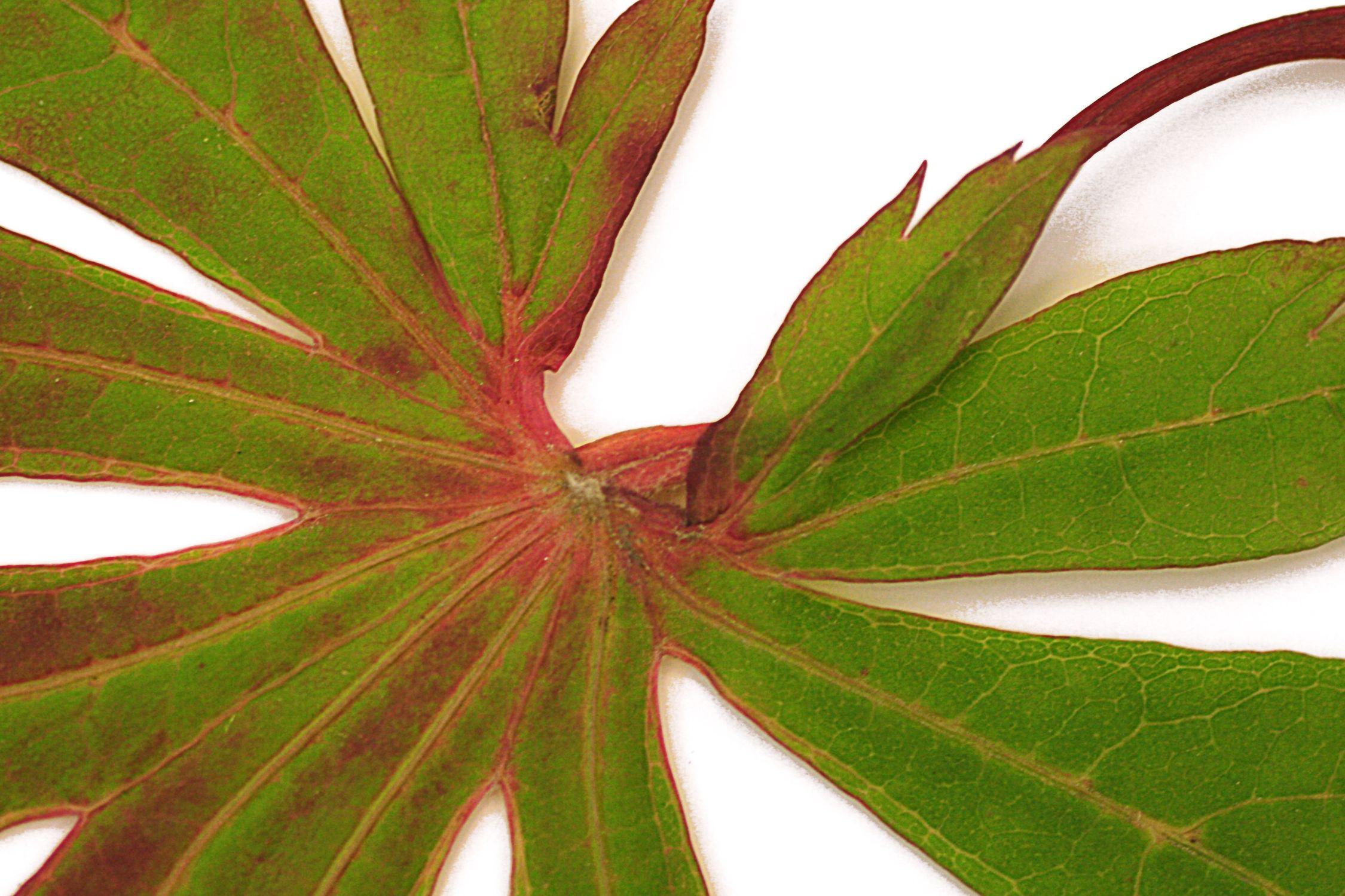 Bild mit Natur, Pflanzen, Blumen, Blätter, Blatt, Blattstruktur