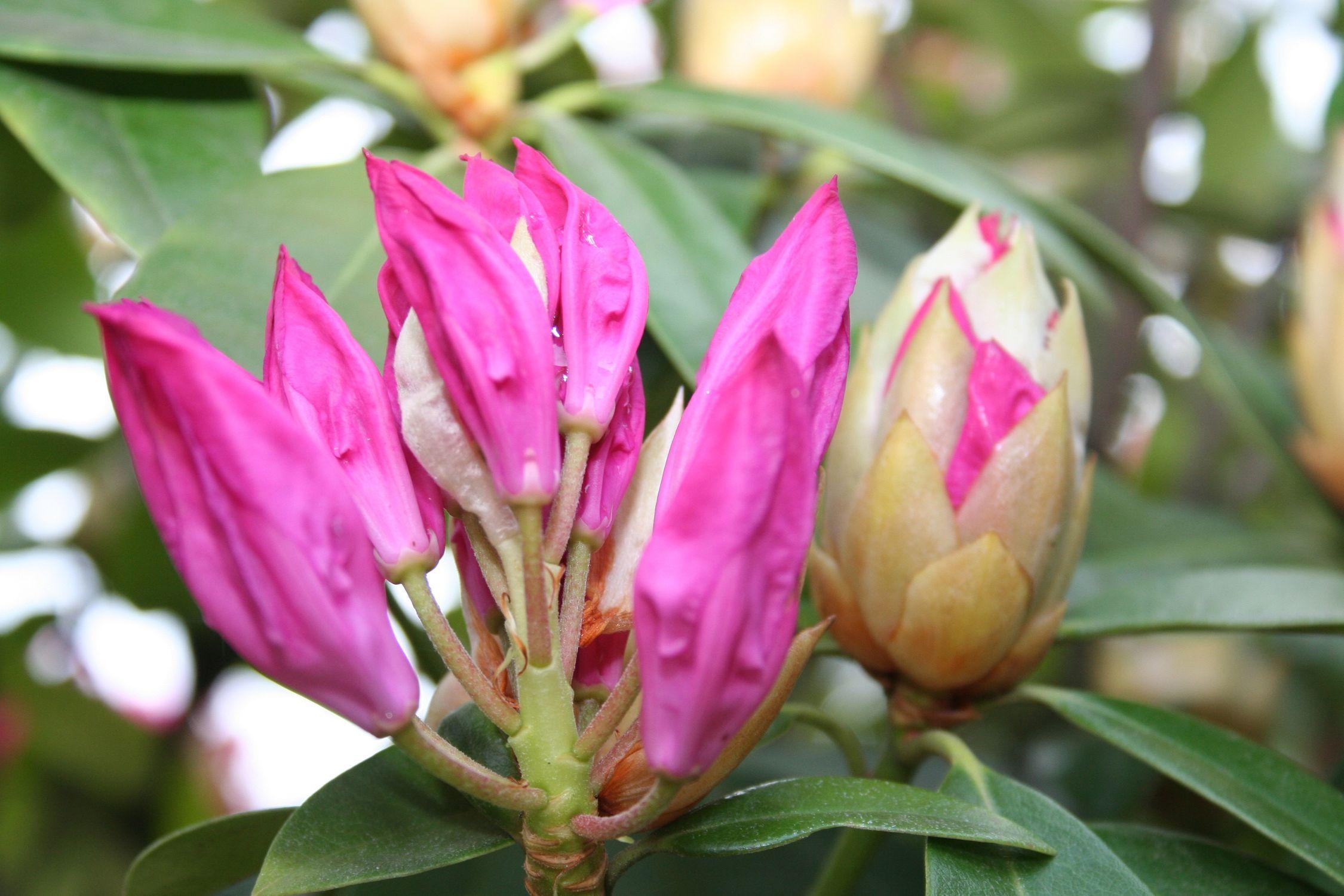 Bild mit Natur, Pflanzen, Blumen
