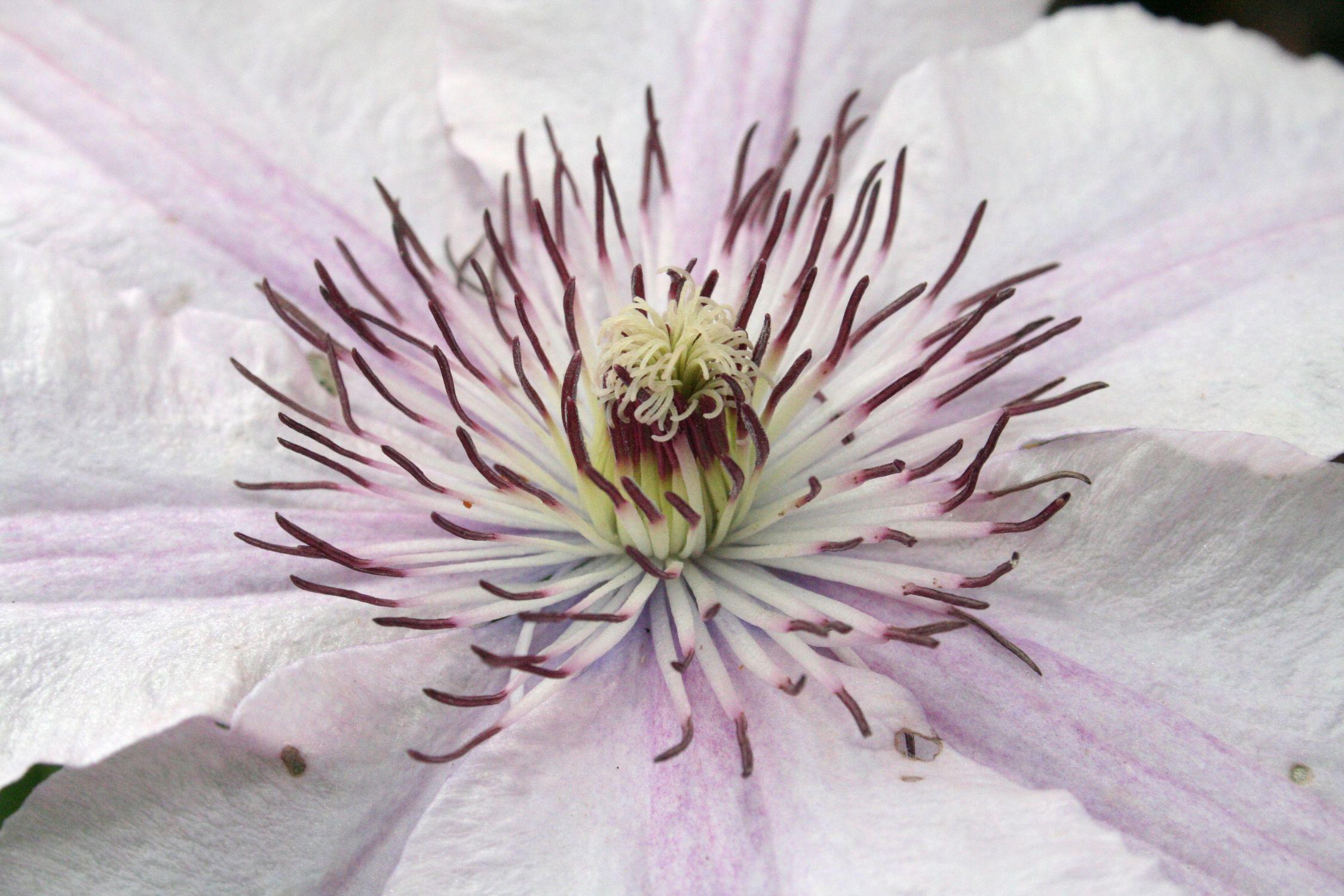 Bild mit Natur, Pflanzen, Blumen, Rosa, Mohn, Blume, Pflanze