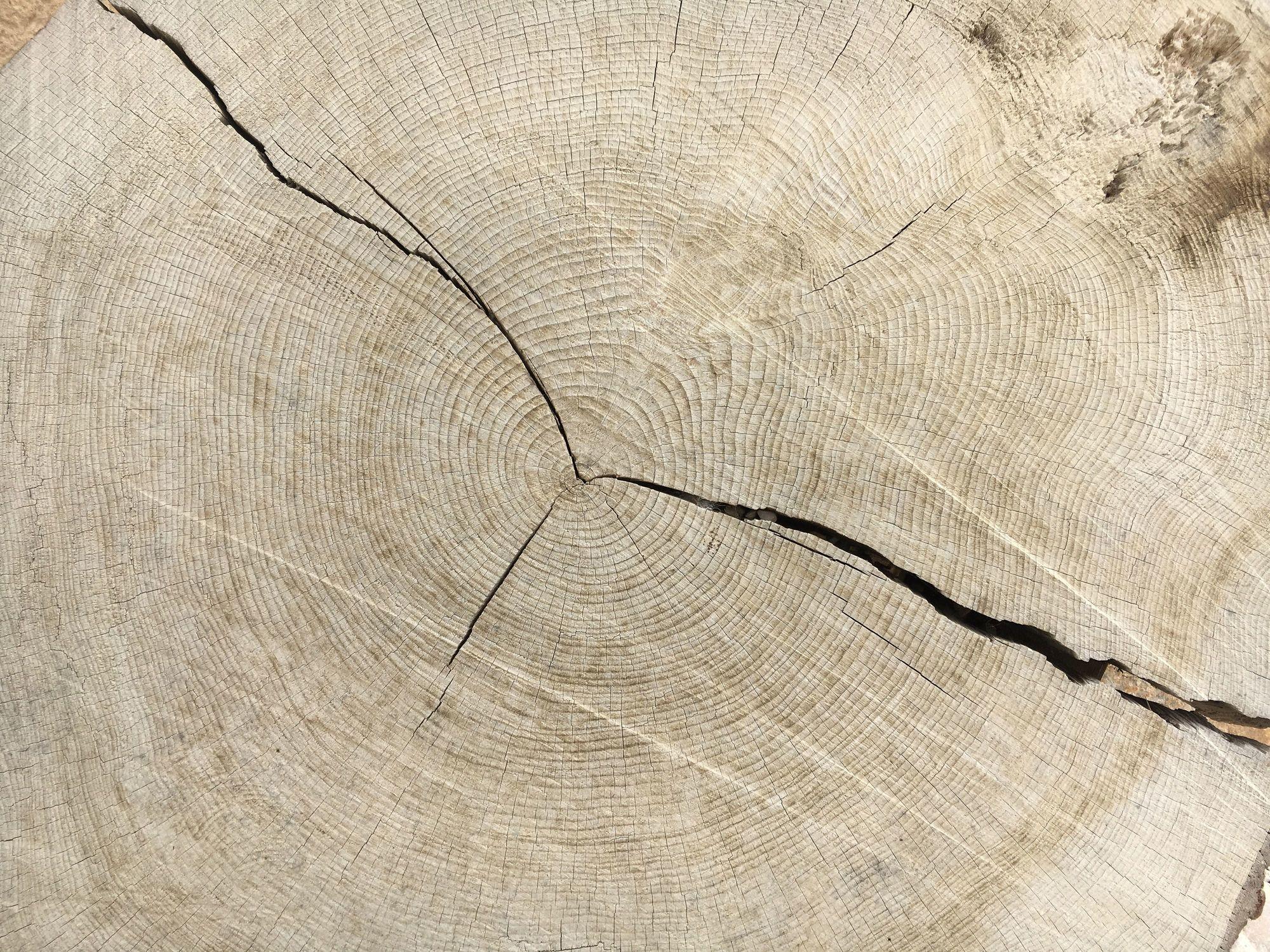 Bild mit Holz, Struktur, Baumstamm, Jahresringe, Holzstruktur, Windriss, Holzscheibe, Eiche, Eichenholz