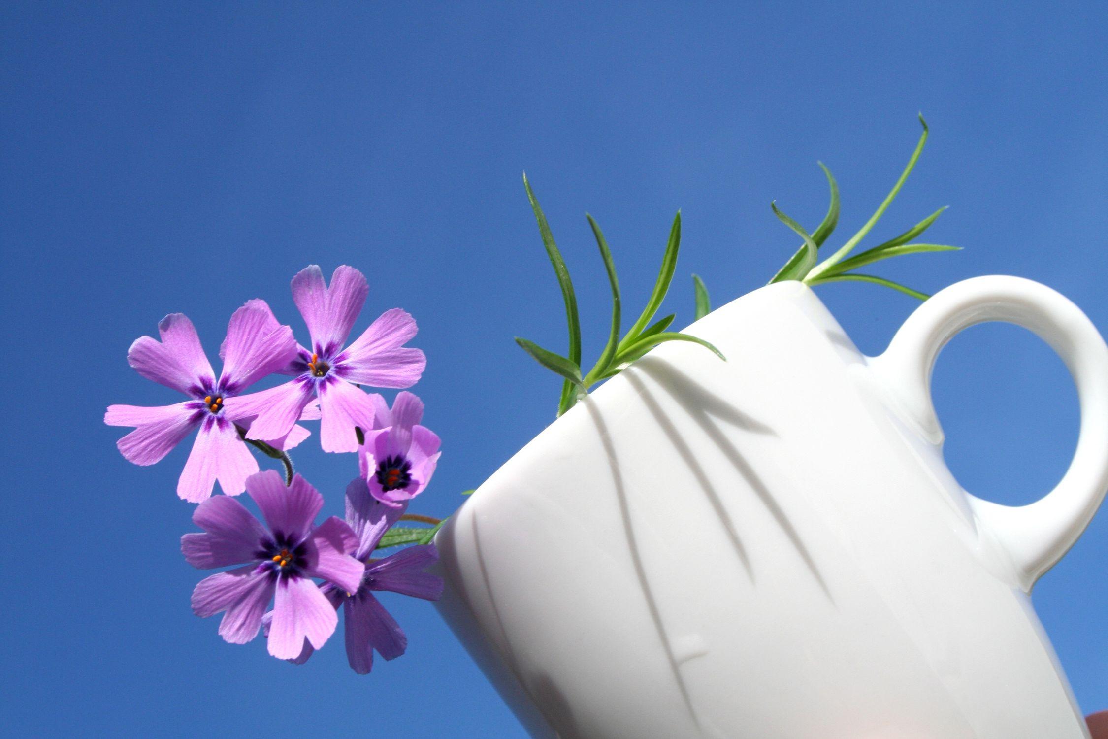 Bild mit Farben, Natur, Pflanzen, Himmel, Blumen, Rosa, Lila, Blau, Küchenbild, Küchenbilder, Küche