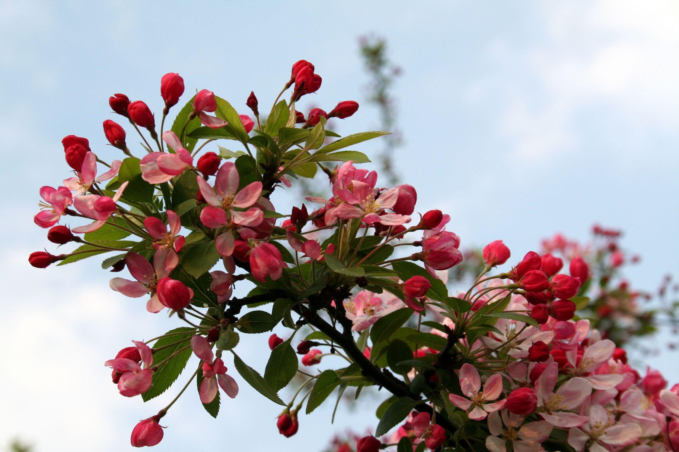 Bild mit Natur, Pflanzen, Bäume, Jahreszeiten, Blumen, Frühling, Blume, Pflanze
