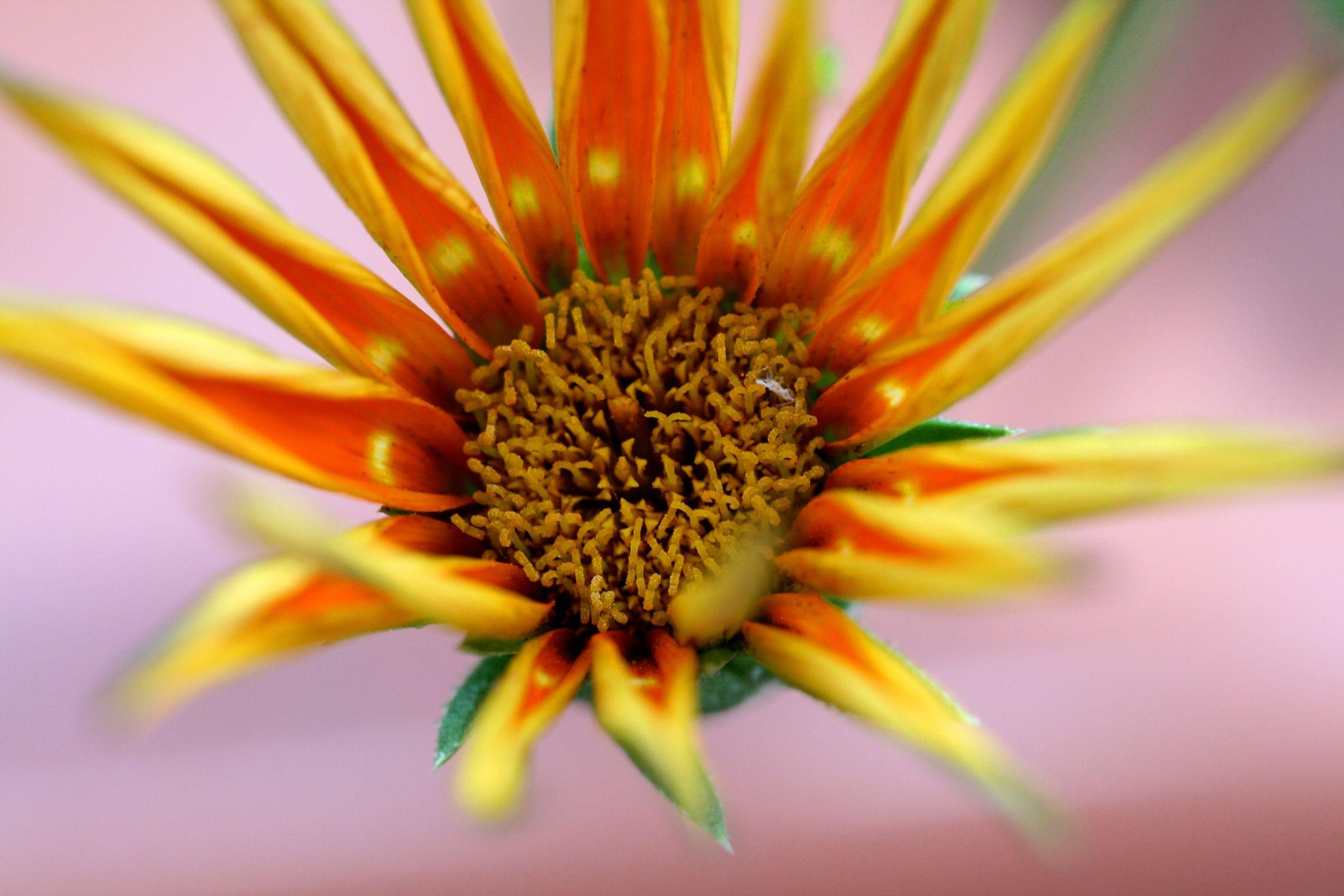 Bild mit Farben, Orange, Gelb, Natur, Pflanzen, Blumen, Blume, Pflanze