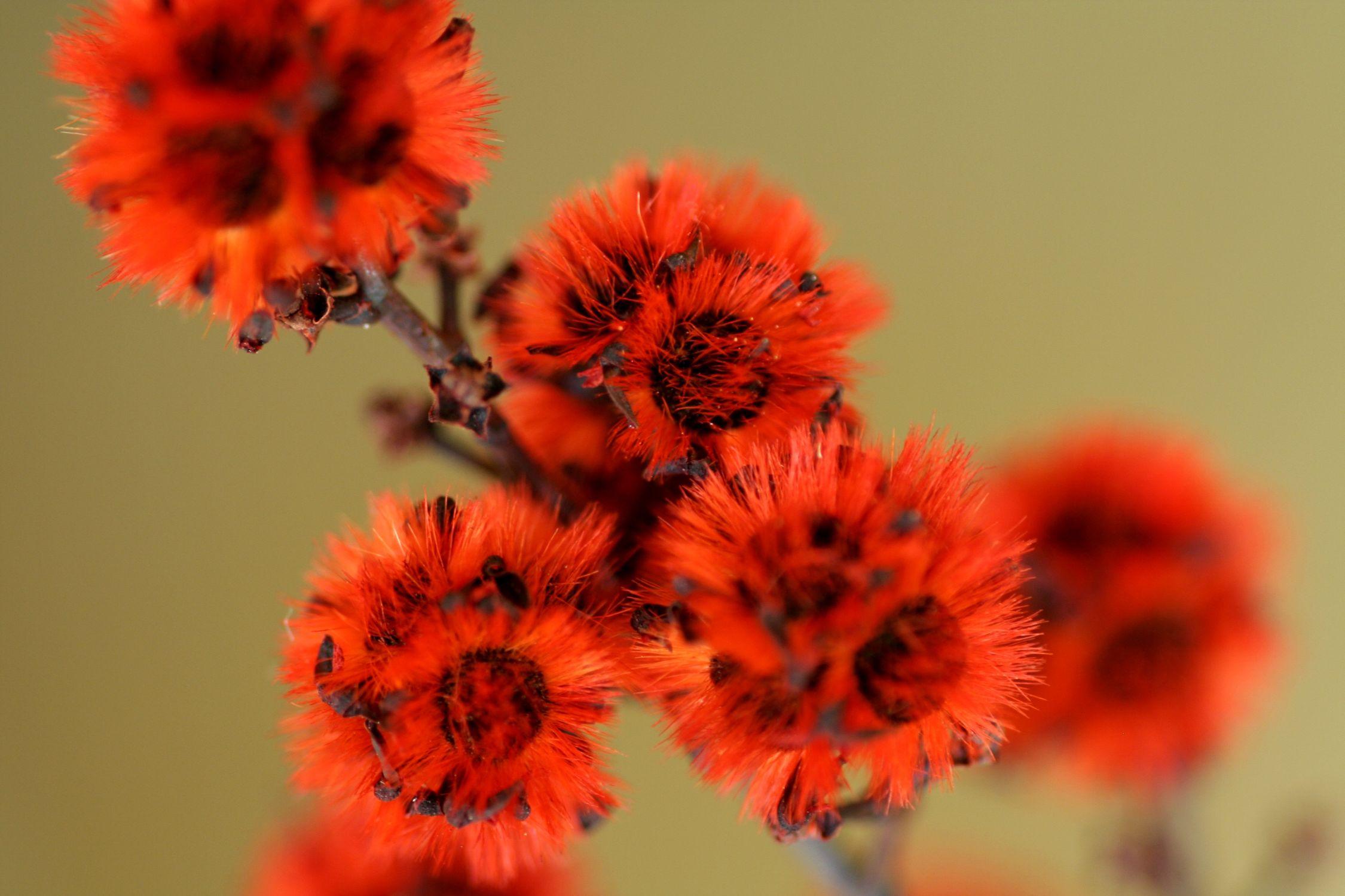 Bild mit Farben, Orange, Natur, Pflanzen, Blumen, Rot