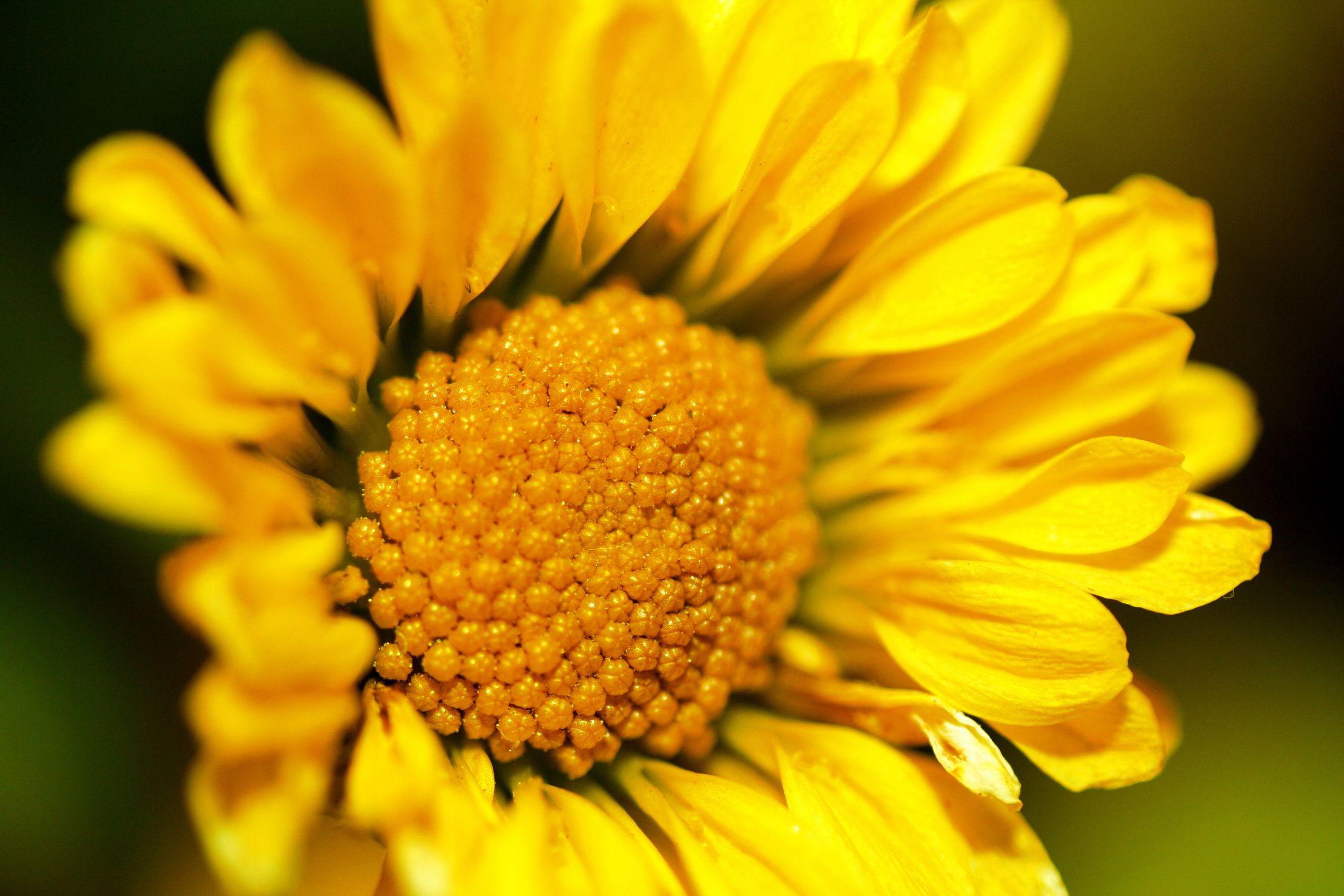Bild mit Farben, Gelb, Natur, Pflanzen, Himmel, Jahreszeiten, Blumen, Frühling, Korbblütler, Sonnenblumen
