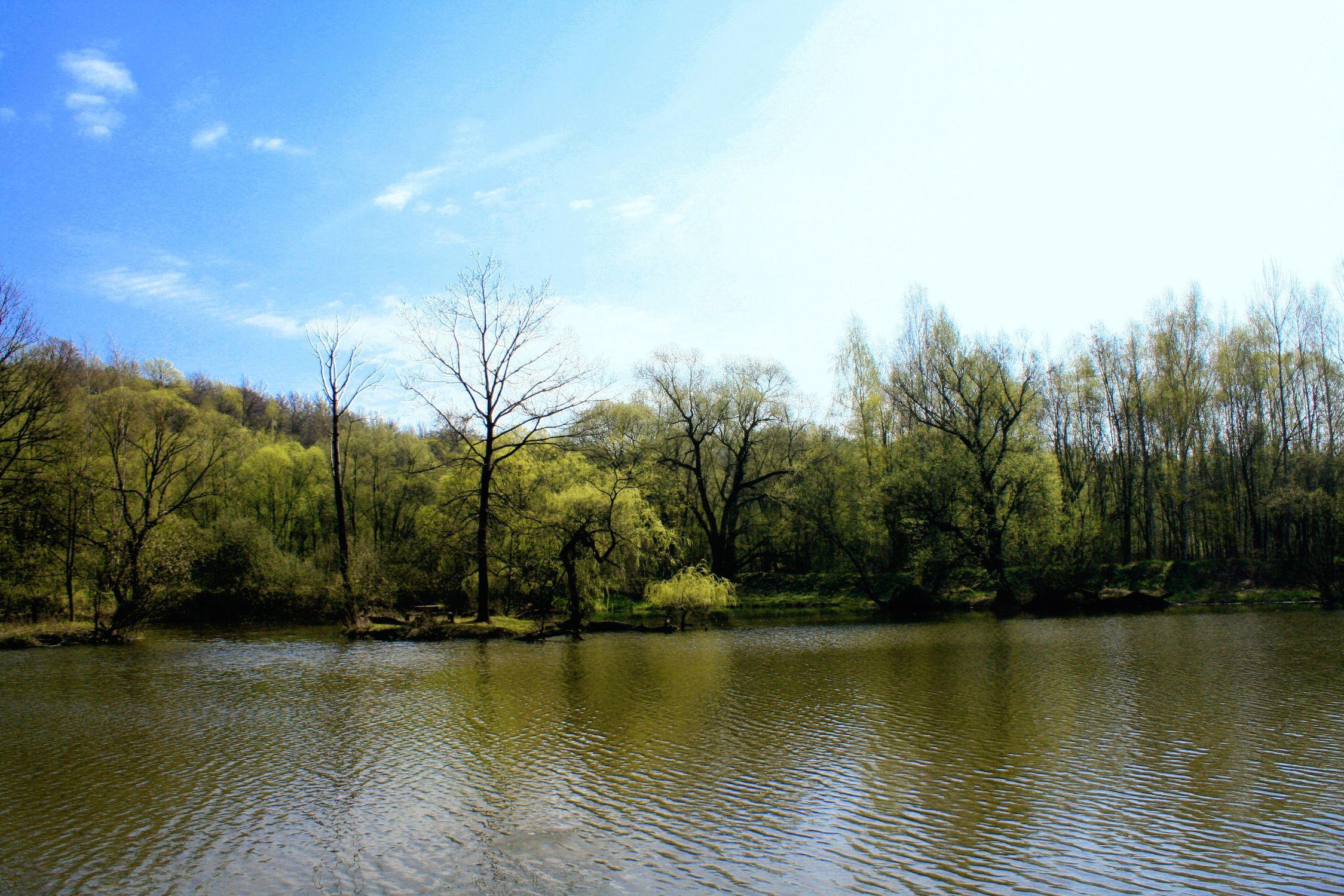 Bild mit Natur, Wasser, Bäume, Gewässer, Küsten und Ufer, Wälder, Seen, Flüsse, Teiche, Stauseen