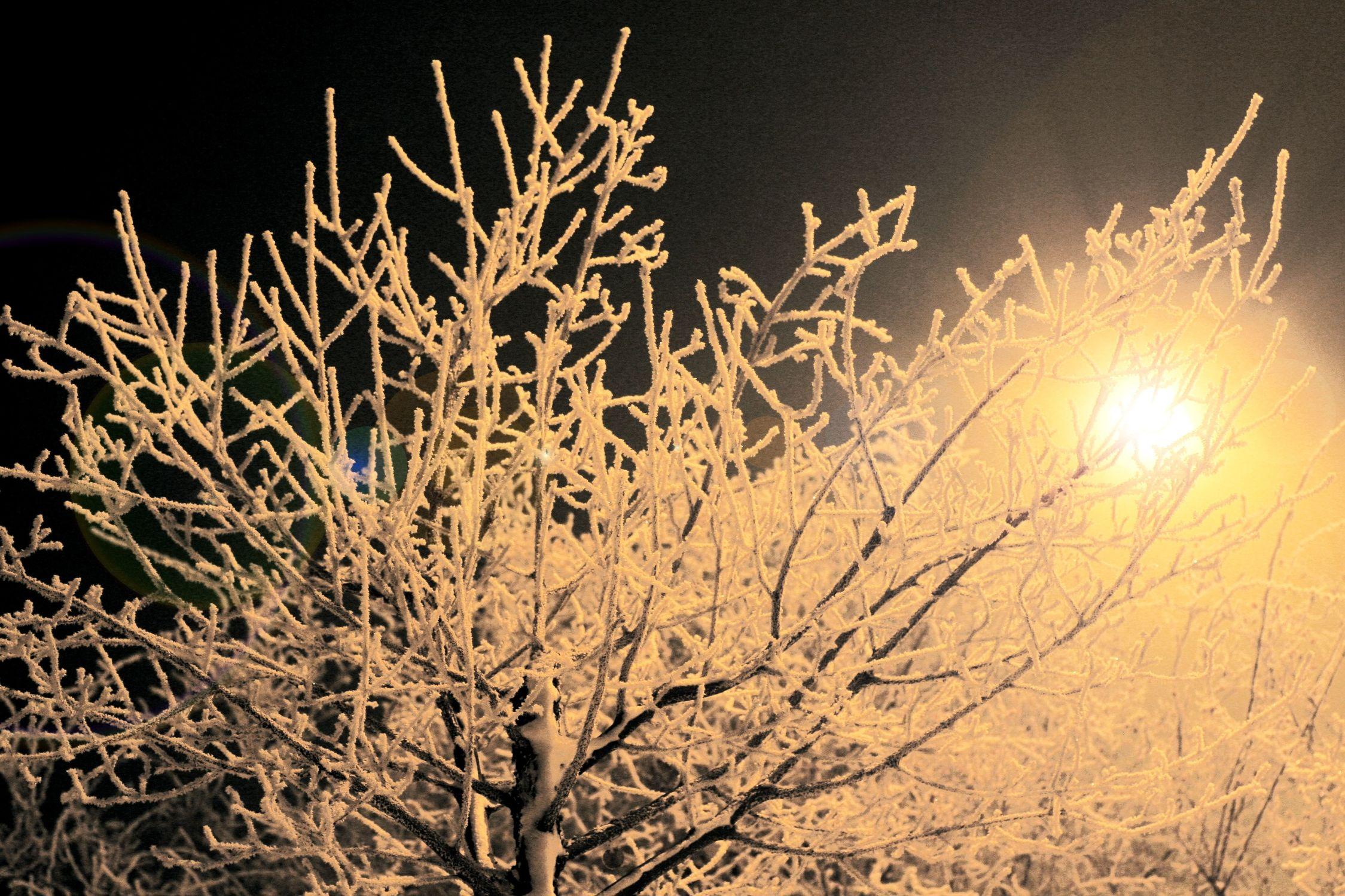 Bild mit Natur, Pflanzen, Himmel, Bäume, Jahreszeiten, Winter, Baum, Pflanze, Tree