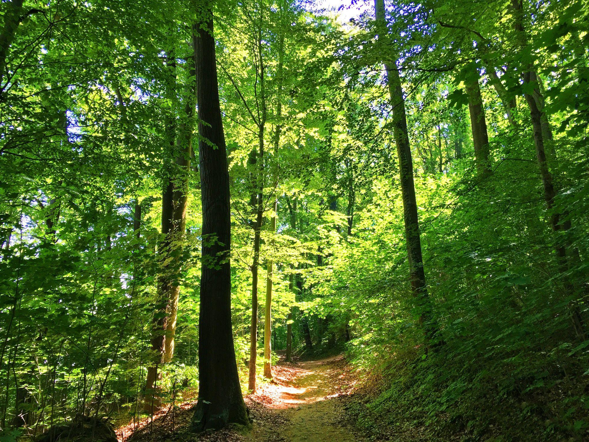 Bild mit Natur, Grün, Pflanzen, Landschaften, Bäume, Wälder, Wald, Lichtung, Baum, Waldlichtung, Weg, Waldweg