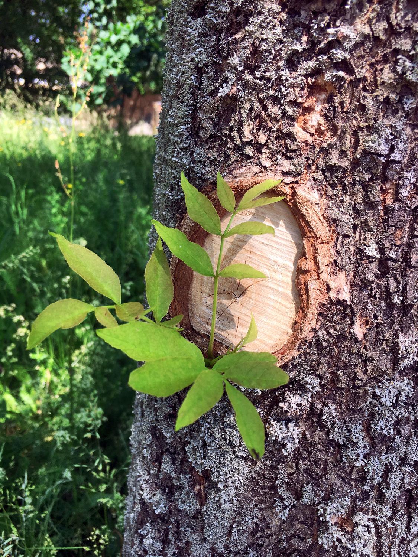 Bild mit Natur, Bäume, Baum, Baumstamm, Tree, Trees, Überleben, Die Natur erobert sich zurück, Baumrinde