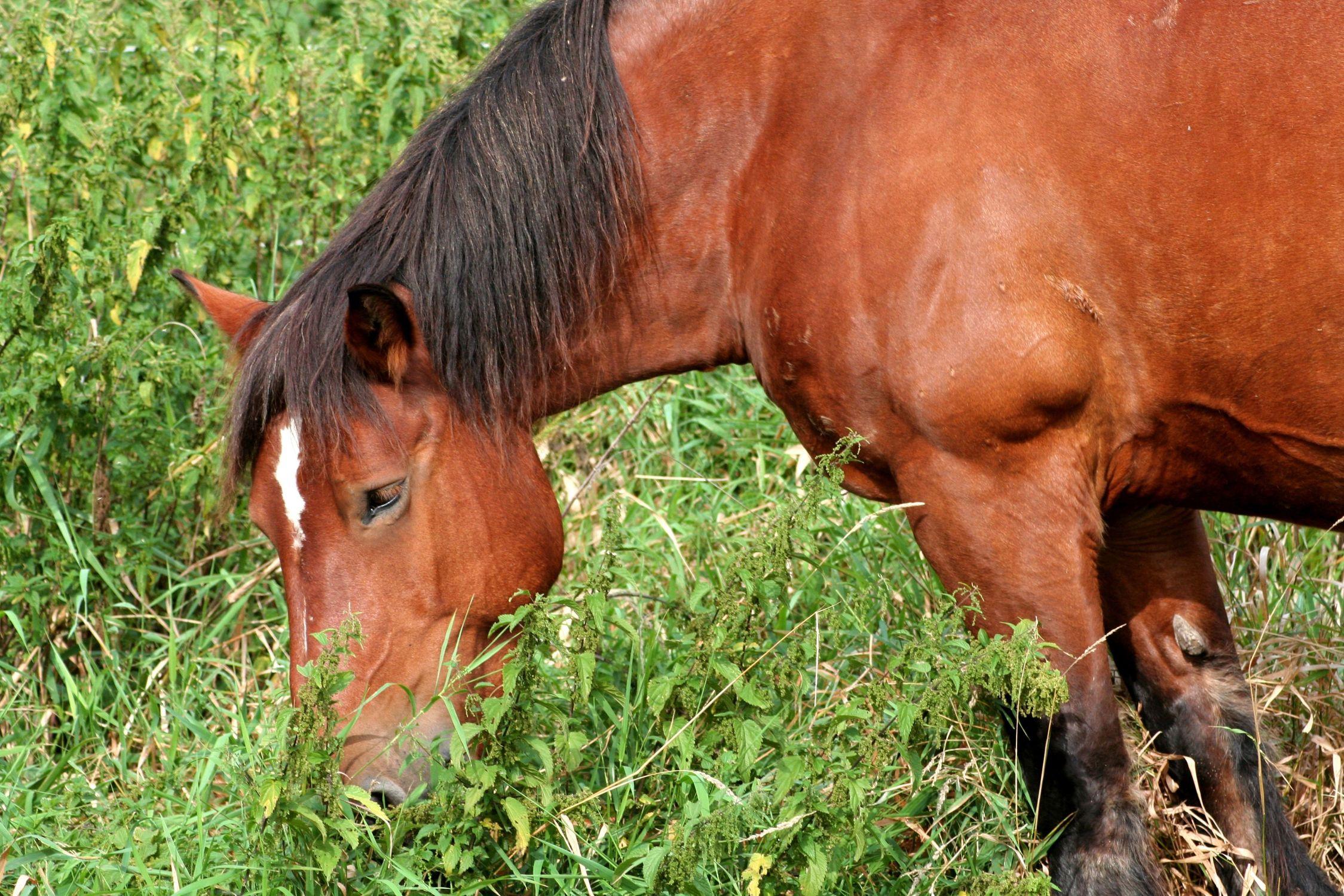 Bild mit Tiere, Tiere, Säugetiere, Natur, Pferde, Tier, Kinderbild, Kinderbilder, Pferd, reiten, Pferdeliebe, pferdebilder, pferdebild