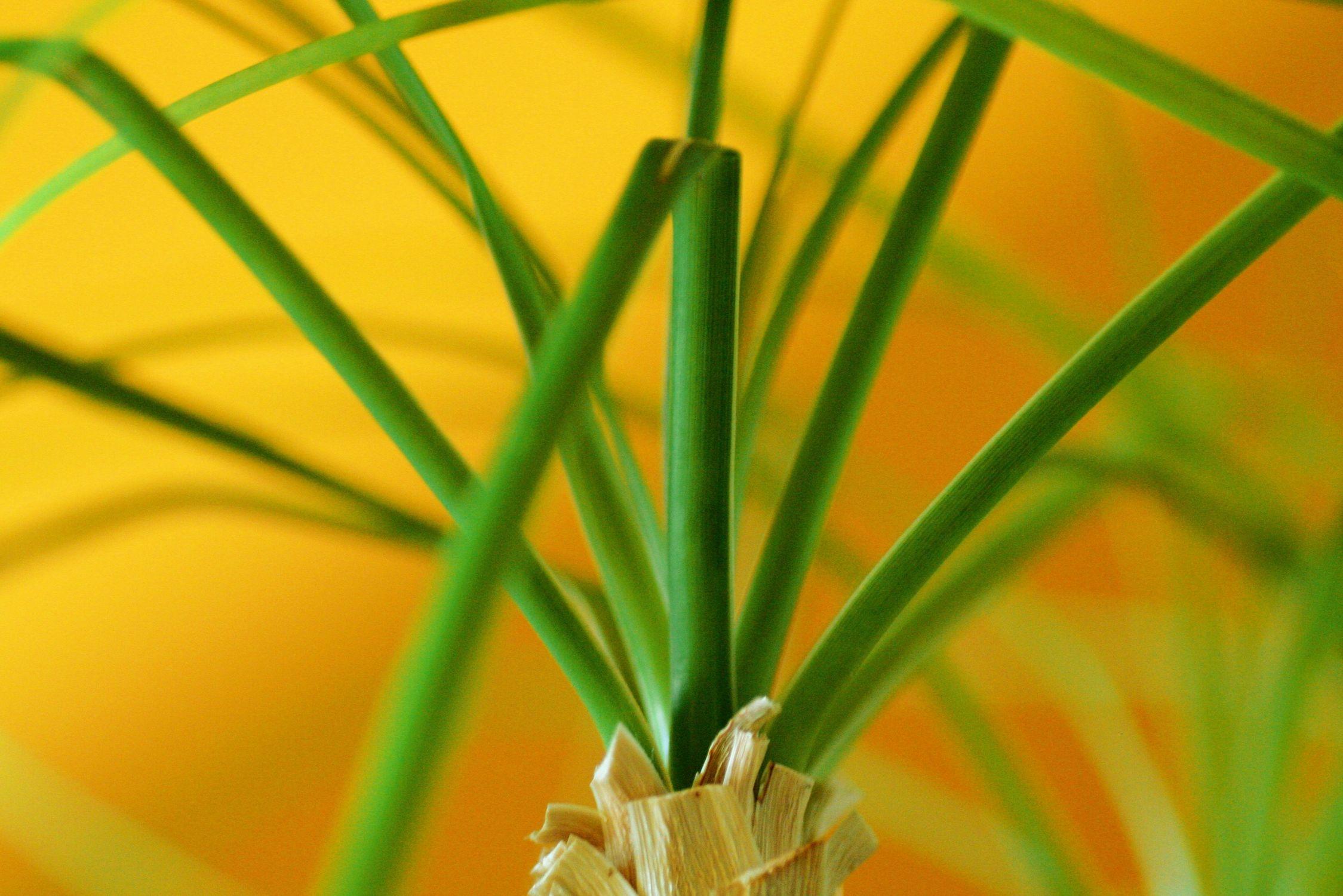 Bild mit Farben, Natur, Grün, Pflanzen, Gräser, Blumen, Blume, Pflanze