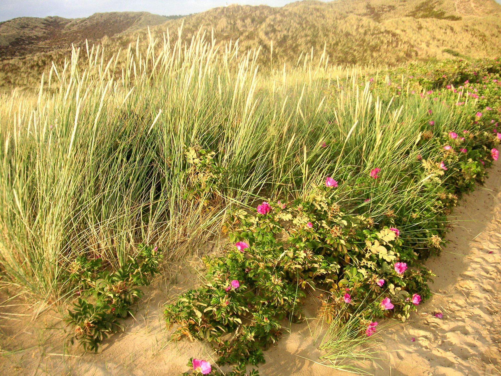 Bild mit Natur, Pflanzen, Gräser, Landschaften, Weiden und Wiesen, Blumen, Sträucher, Buschland