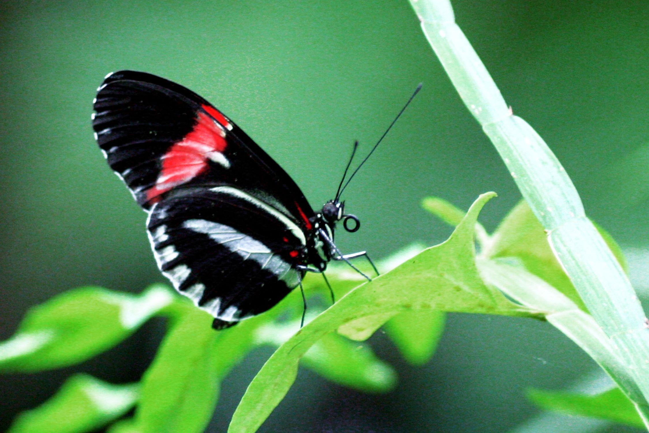 Bild mit Tiere, Insekten, Schmetterlinge