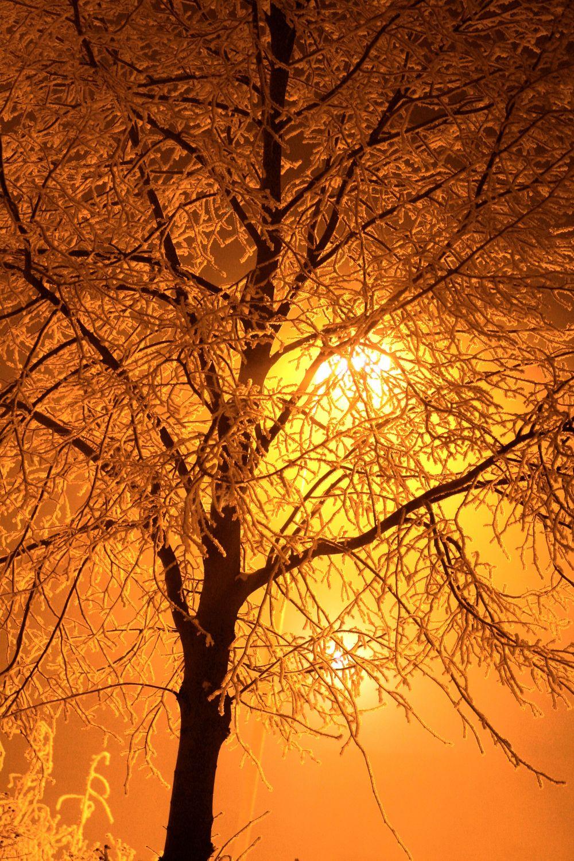 Bild mit Farben, Orange, Gelb, Natur, Pflanzen, Landschaften, Himmel, Bäume, Sonnenuntergang, Sonnenaufgang, Abendrot