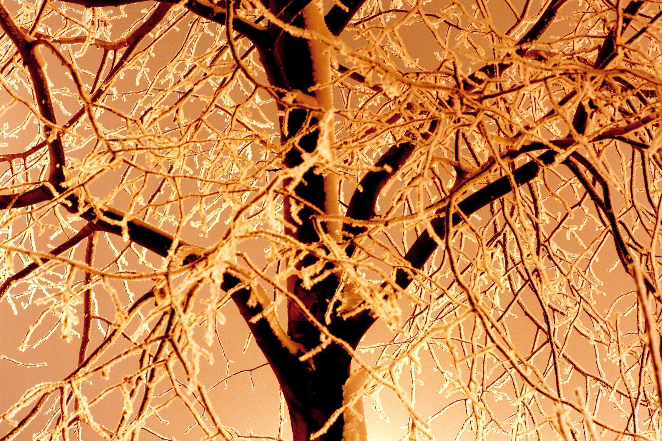 Bild mit Natur, Pflanzen, Himmel, Bäume, Winter, Baum, Pflanze