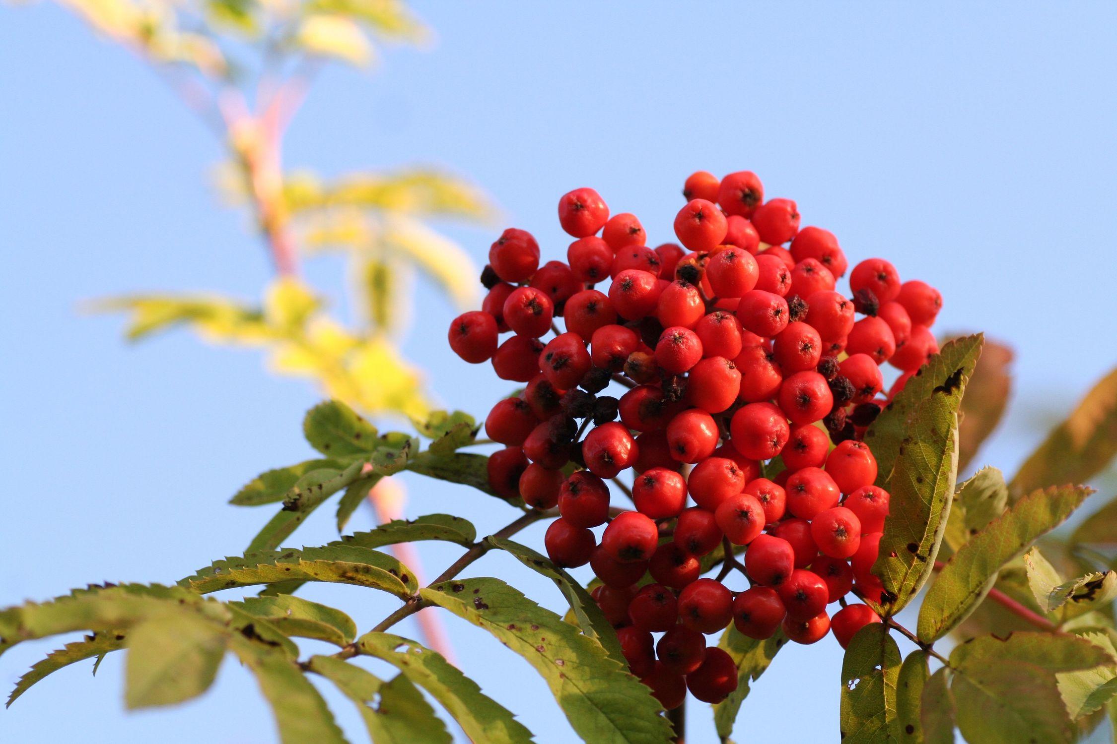 Bild mit Natur, Pflanzen, Bäume, Früchte, Lebensmittel, Essen, Blumen, Beeren