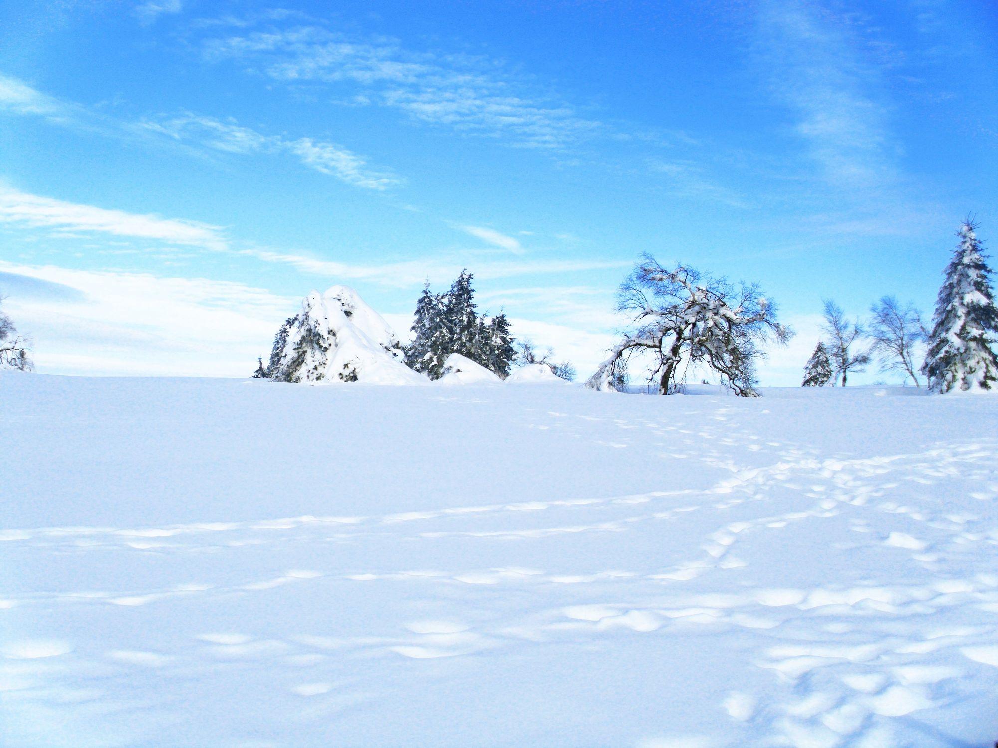 Bild mit Farben, Natur, Pflanzen, Landschaften, Berge und Hügel, Berge, Himmel, Bäume, Nadelbäume, Jahreszeiten, Winter, Wetter, Schnee, Wolken, Blau, Tanne, winterlandschaft
