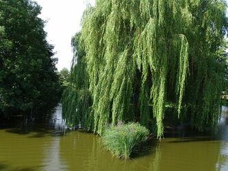 Bild mit Natur, Wasser, Bäume, Gewässer, Flüsse, Baum, Fluss