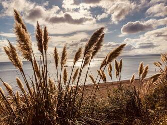 Bild mit Beach, Plant, Wind