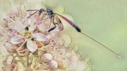 Bild mit Kunst, Natur, Pflanzen, Frühling, Tier, Blume, Makro, garten, Insekt, Fiederspiere