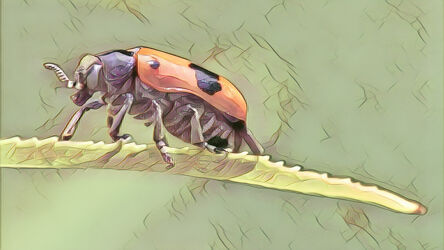 Bild mit Kunst, Natur, Pflanzen, Tier, Blume, Makro, Blatt, garten, Insekt, Käfer