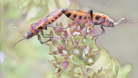 Bild mit Kunst, Natur, Pflanzen, Tier, Blume, Makro, Blüten, garten, Insekt, Käfer