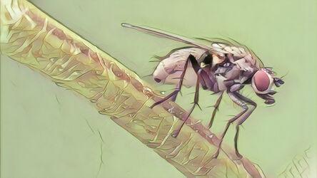 Bild mit Kunst, Natur, Pflanzen, Frühling, Tier, Blume, Makro, garten, Insekt, Fliege