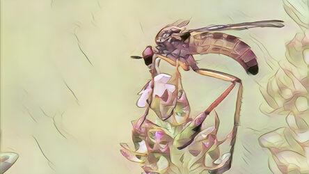 Bild mit Kunst, Natur, Pflanzen, Tier, Blume, Makro, garten, Insekt, Fliege