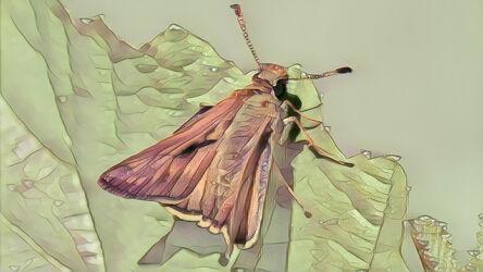 Bild mit Kunst, Natur, Pflanzen, Tier, Makro, garten, Falter, Insekt