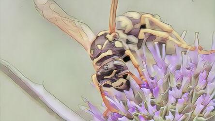 Bild mit Kunst, Natur, Pflanzen, Tier, Blume, Makro, garten, Insekt, Wespe