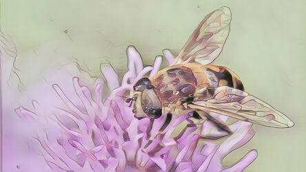 Bild mit Kunst, Natur, Pflanzen, Tier, Blume, Makro, garten, Insekt, schwebefliege