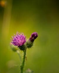 Bild mit Natur, Blume, Pflanze, Makro, Licht