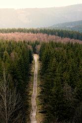 Bild mit Berge, Herbst, Wald, Weg, Landschaft, stimmungsvoll, Sauerland