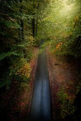 Bild mit Natur, Bäume, Herbst, Straßen und Wege, Wald, Lichtstimmung, Laub