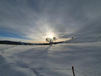 Bild mit Winter, Baum, Winterzeit, snow, Freidorf, Thurgau