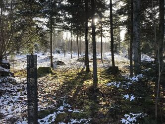 Bild mit Winter, Wald, Waldlichtung, Spaziergang, Sonnenstrahlen