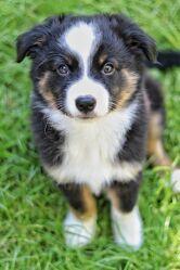 Bild mit Sommer, Hunde, Glücklich, Welpe, Glück