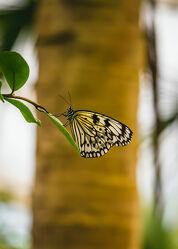 Bild mit Natur, Blumen, Makroaufnahme, Schmetterling