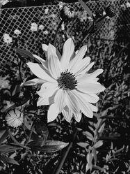 Bild mit Blume, Sommergarten
