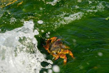 Bild mit Meer, Meerestiere, Krabben