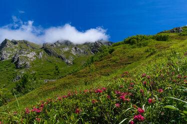 Bild mit Landschaften, Berglandschaft, Alpenrose